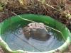 Курорт для лягушки