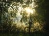 Лесной шатер