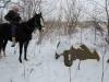 Учет зимующих видов птиц