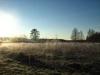 Утро после заморозка
